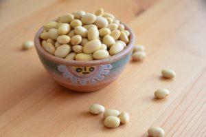 カナリア豆(マヨコバビーン)