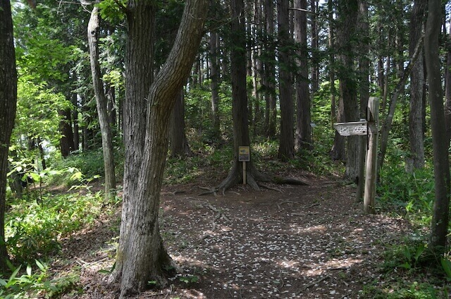 青葉の森緑地 化石の森までの途中 標識