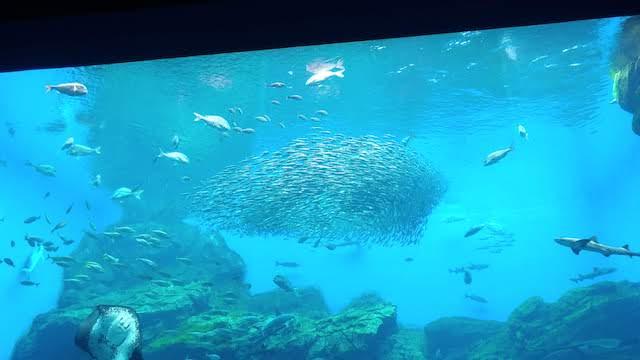 仙台うみの杜水族館 大水槽