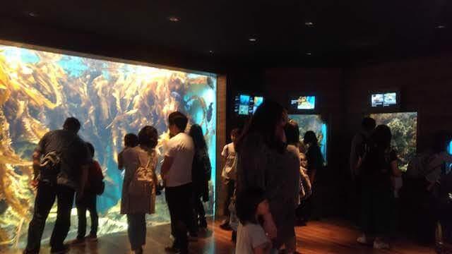 うみの杜水族館 近海の海