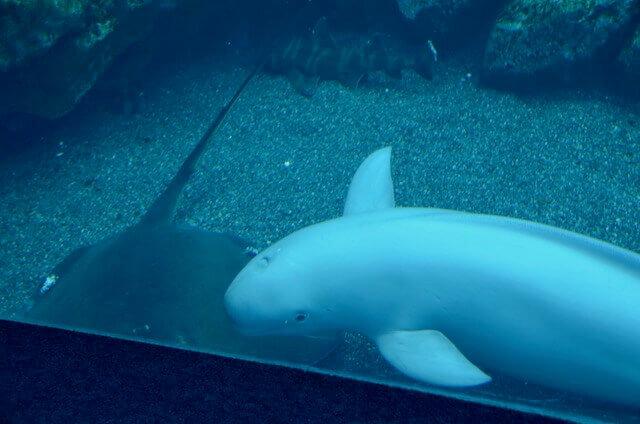 仙台海の杜水族館のすなめり