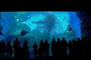 仙台海の杜水族館