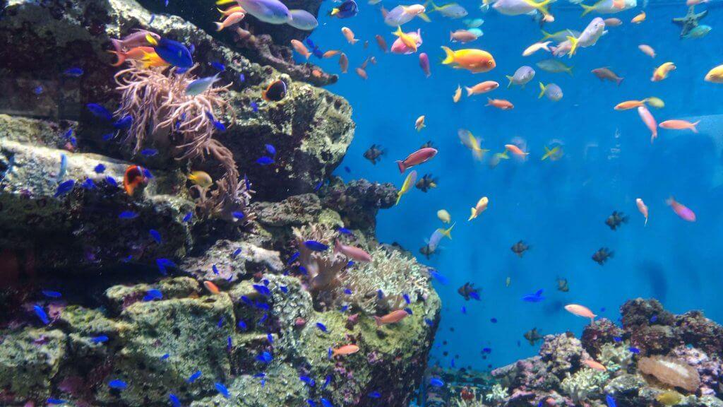 グレートバリアリーフの魚